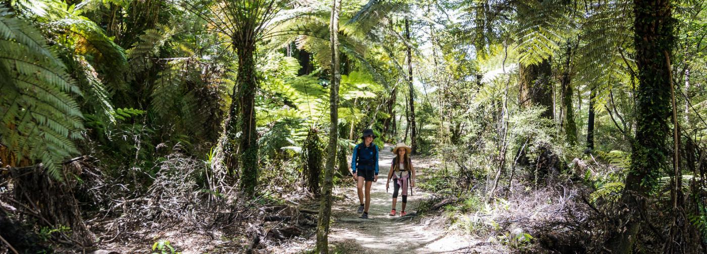 Marahau Water Taxi - Walking & Hiking in The Abel Tasman National Park - short walk - easy walk - Pitt Head Loop